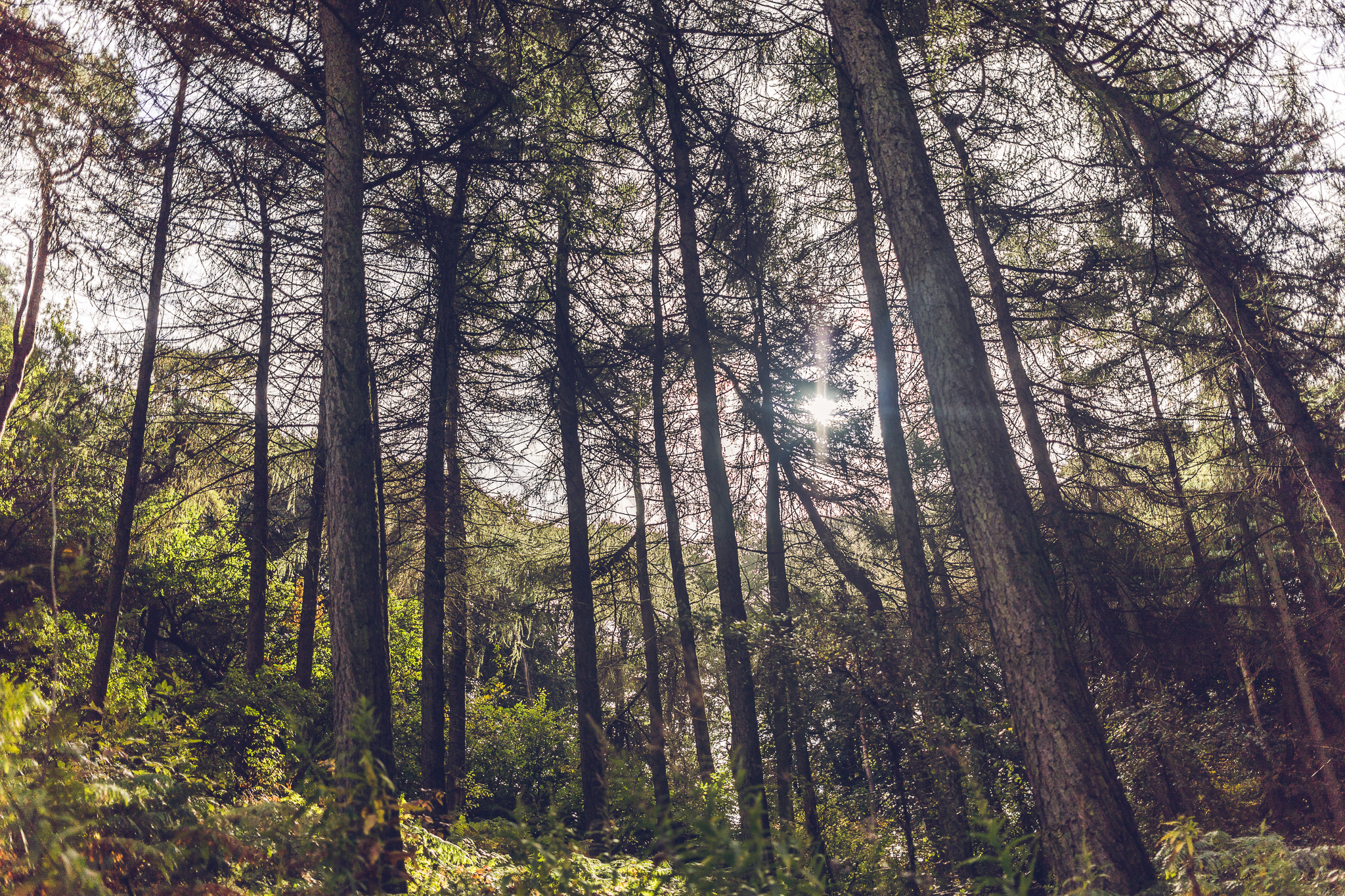 001-processed-trees
