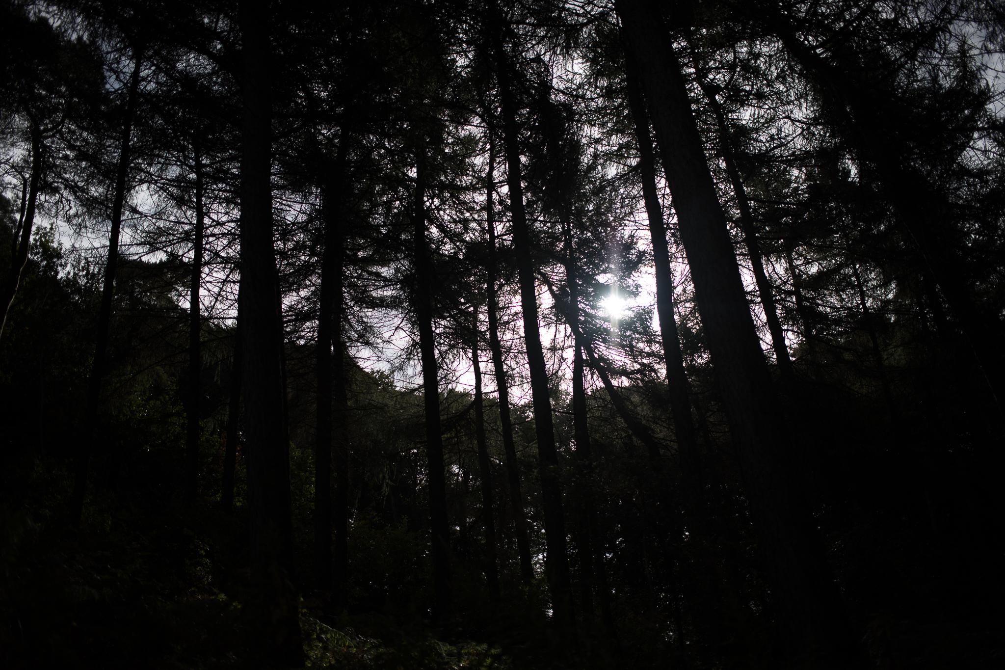 001-zeroed-trees